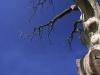 koluvere-linnus